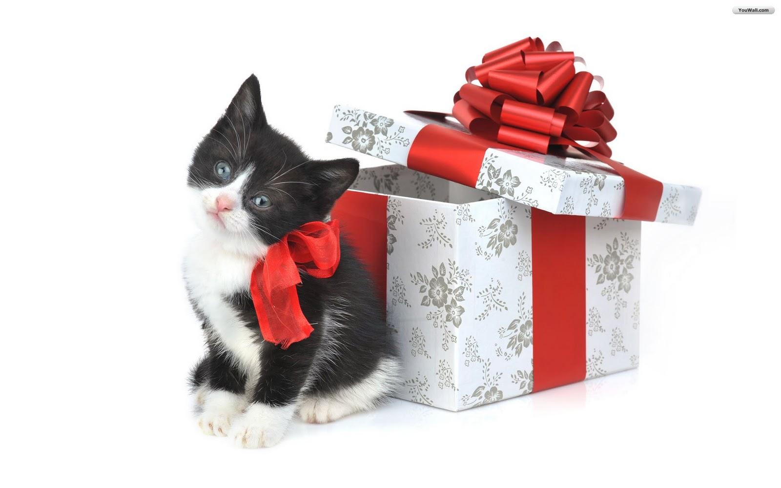 http://2.bp.blogspot.com/_cc27ytOroSM/TRThEwtCHII/AAAAAAAACuY/dWFKRcNOzIA/s1600/christmas_cats_wallpaper_18b43.jpg