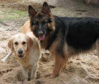 hombres follando con perras animales
