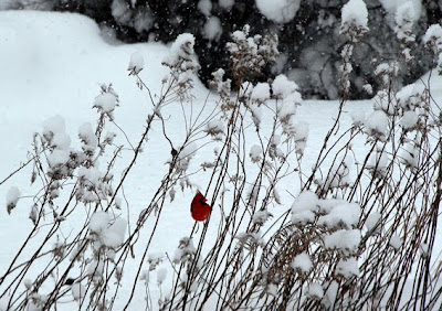 D20 1610 A Bird In The Bush