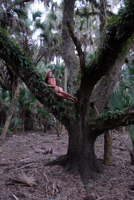 D20 5721 Up A Tree