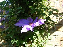 Clematis growing up one pillar