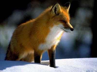 Ángel...el octavo cinéfilo: Fantastic Mr.Fox ... - photo#26