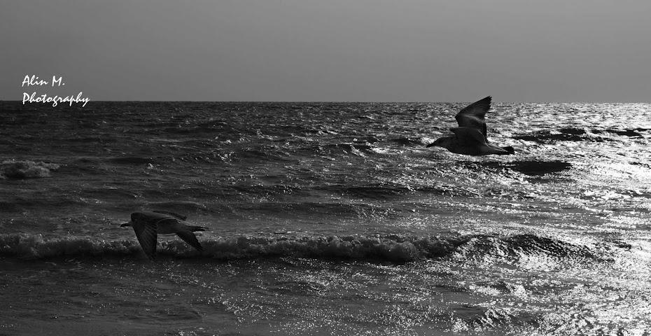 Alin M. Photography