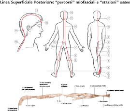 Os trilhos anatómicos (Myers)