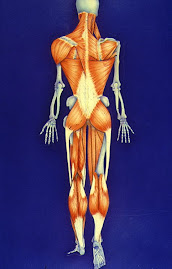 Cadeias musculares Mézières & Nisand