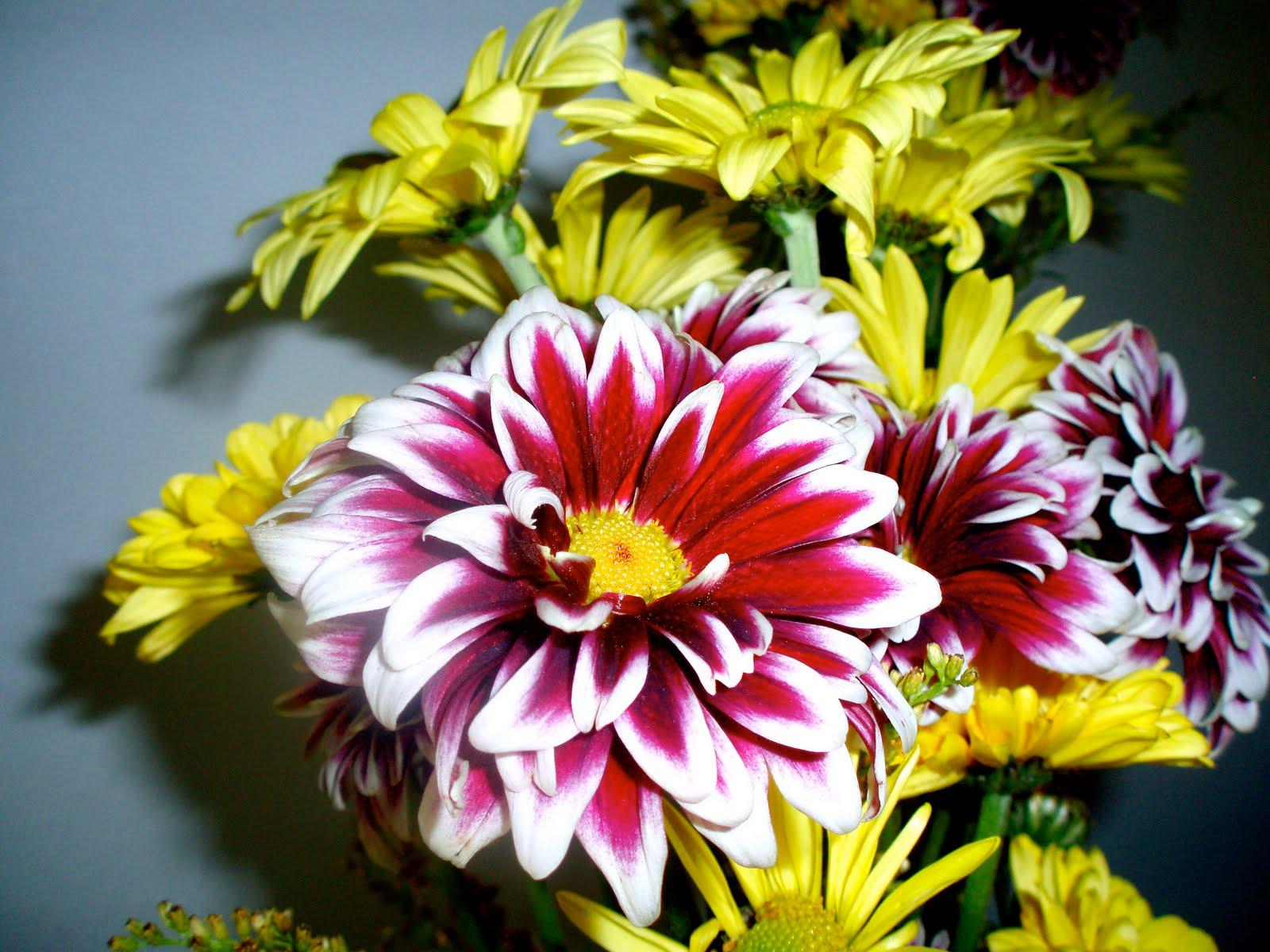 The flower girl blog purple and yellow daisies the flower girl blog izmirmasajfo