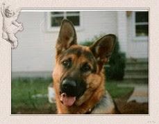 Älskade Bonzon  1995-06-12 --  2007-09-24 från Beathalandets Kennel
