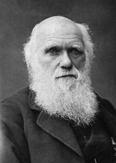 darwin theory Theory of evolution - there were at least five fundamental stages of evolution that were required prior to any possibility of organic life.