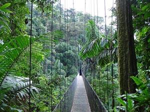 Sumatra Flora And Fauna | RM.
