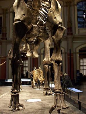 Dinosaurierskelette Museum für Naturkunde Berlin