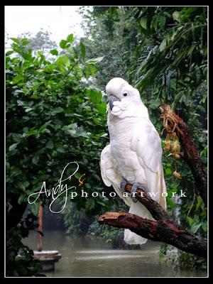 Search Results Gambar Bbm Bergerak Burung Murai : Pusatnya Download