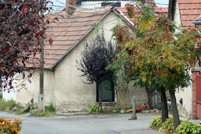 pilisvorosvar-daily-photo-akacfa-utca