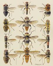 Invertebrados de estudio de Lamarck.