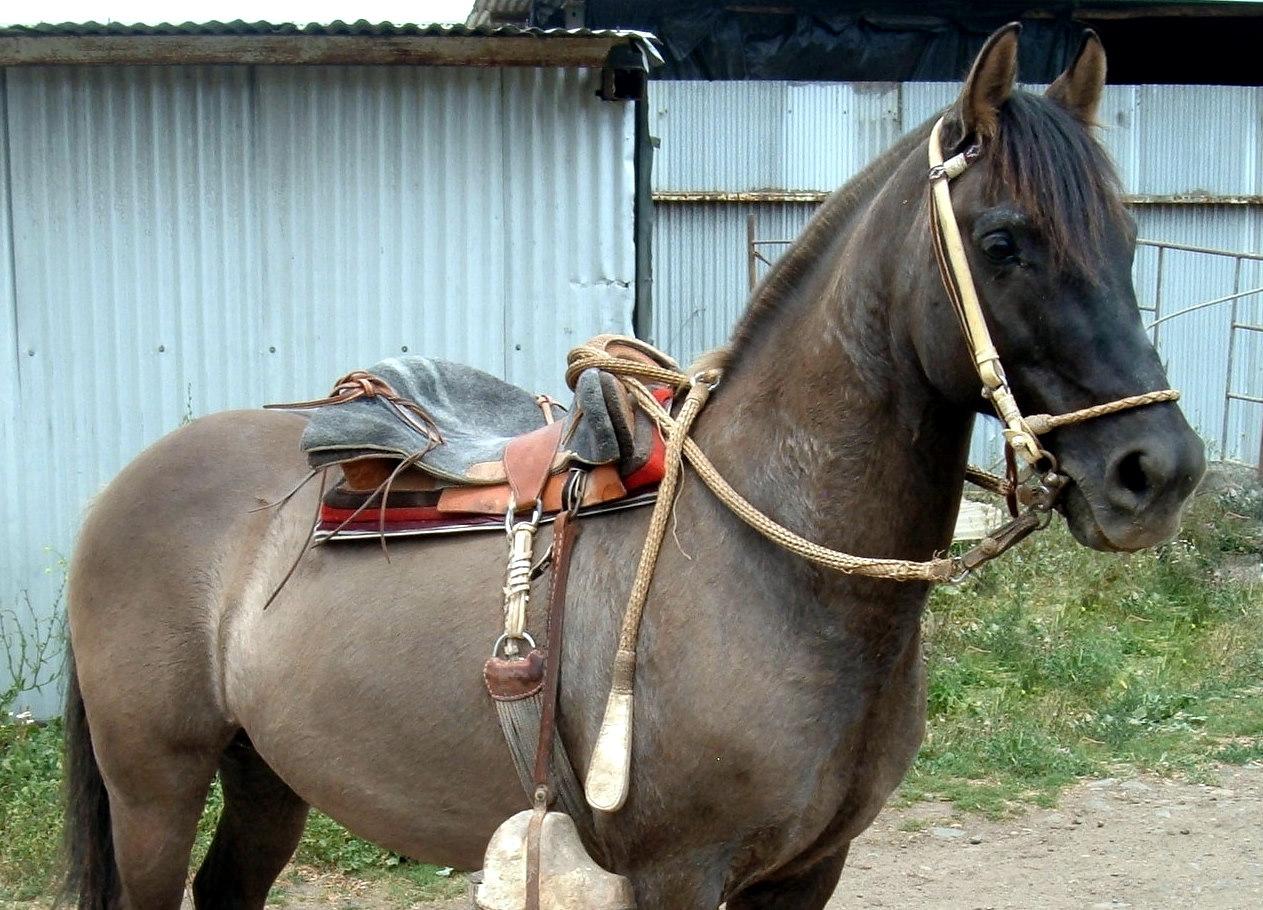 Pin caballos venta monturas chilenas para trabajo y paseo for Monturas para caballos