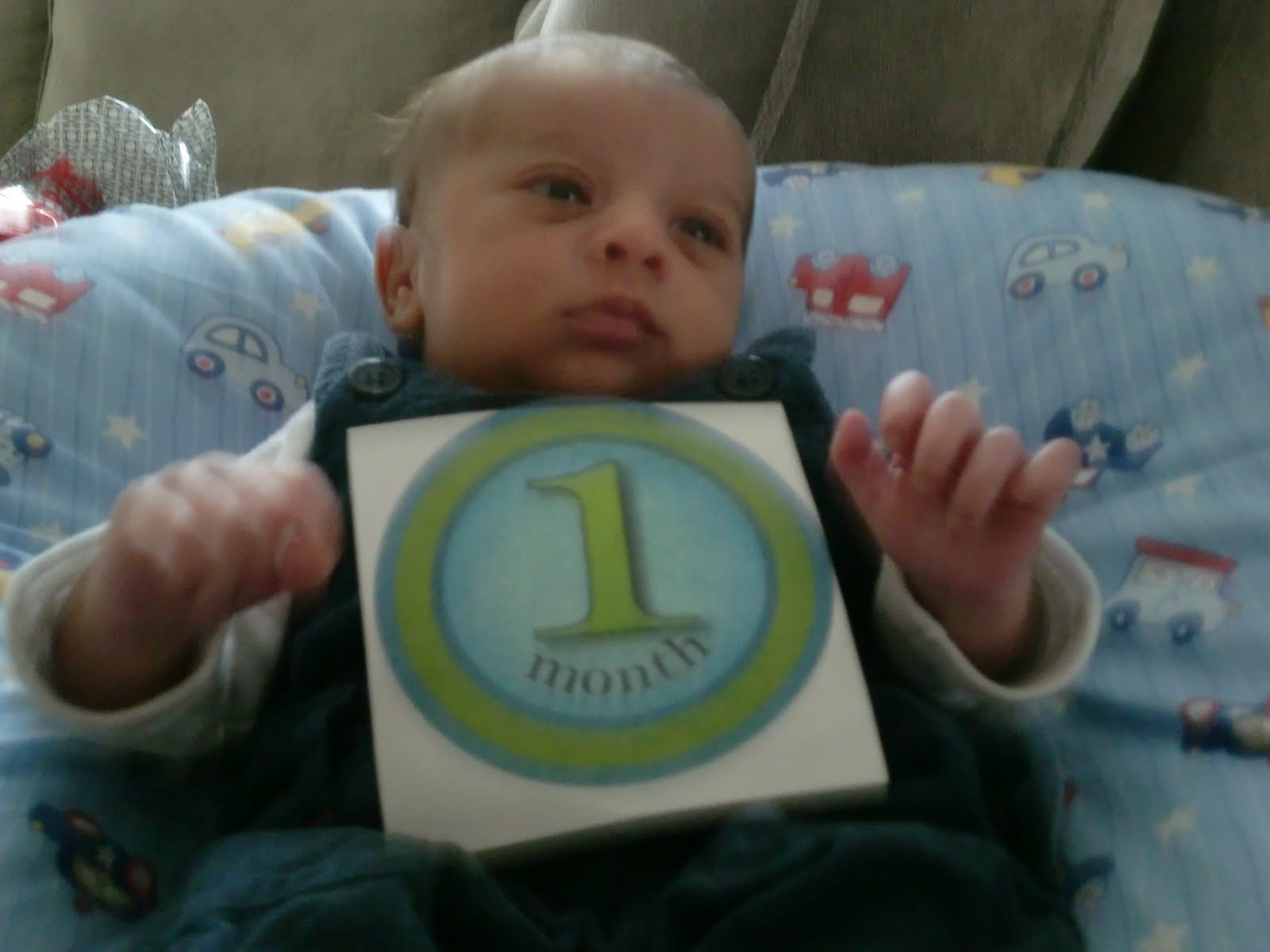 our little swiss mountain baby boy max is 1 month old!max is 1 month old!