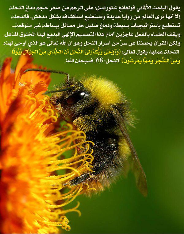 صورة وآية - صفحة 2 Bee-disign