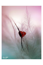Qué frágil y hermoso puede ser...