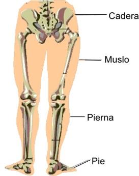 Las causas de la descamación de la piel entre los dedos
