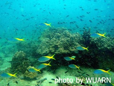 ปะการังใต้ทะเล