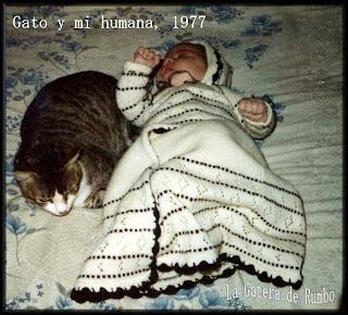 Gato con bebé