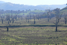 Dry bed of Hume Reservoir near Tallangatta (Sept. 2008)
