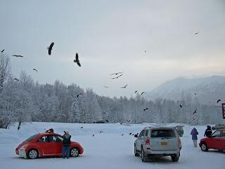 eagle paradise in Alaska