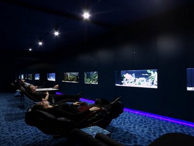 relaxing body with massage chair while resting the eyes viewing cute marine life in aquarium