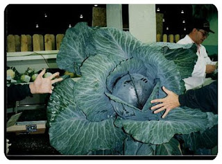 giant vegetable for vegetarian
