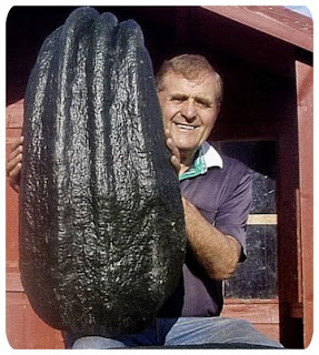most of this giant vegetables used in competition
