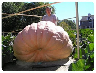 big pumpkin for large family