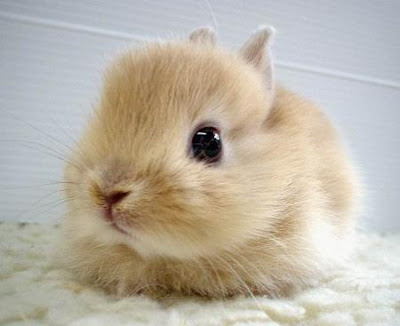 cute little bunny