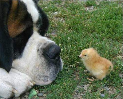 conversation between dog and chick