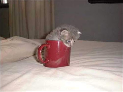 kitten stuck in mug. flexible kitten trying for get out from mug