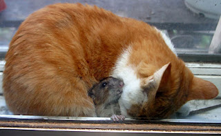 cat and mouse are friend
