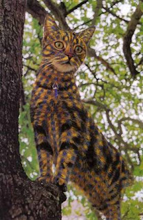 cute painted cat on tree