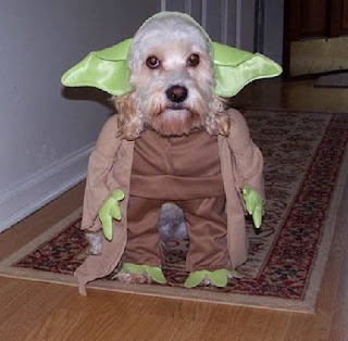 kill my owner, i must! - yoda the dog