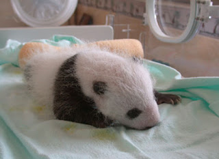 good sleep for baby panda