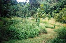 Instalacion Silvestre