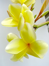 Frangipani, one of them