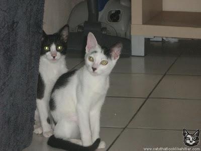 terselubung: Kucing-kucing Lucu Ala Hitler