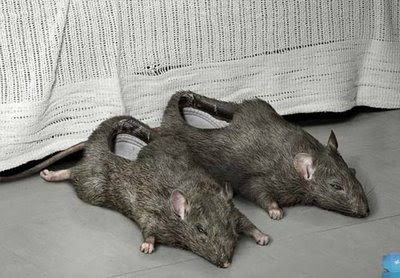 Most Disturbing Shoe: The Rat Shoe