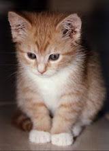 Kucing Jogja