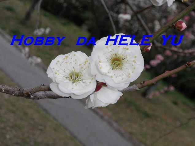 Hobby da Hele Yu.