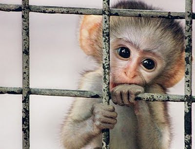 Please don't keep them in captivity: a visual petition