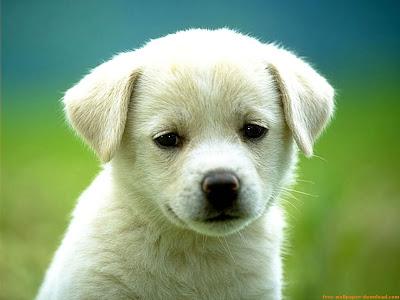 cachorro cachondon
