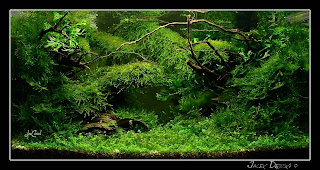 Beau Aquatic Mosses Can Be Some Of The Most Beautiful Aquatic Plants If Grown  Correctly And Given The Right Environment. Wispy Fronds Of All Shapes And  ...