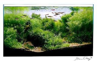 Aquascape Of The Week: Stephen Chongu0027s Bamboo Forest
