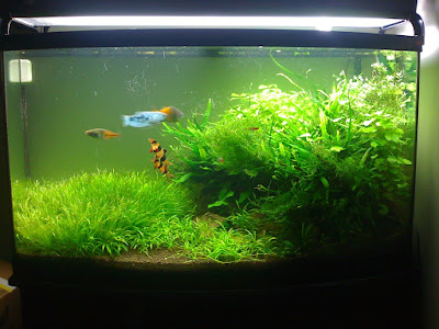 How To Move A Planted Aquarium Part 1: Planning