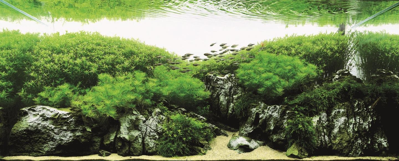 ADA International Aquatic Plants Layout Contest 2010: Top 10 Tanks