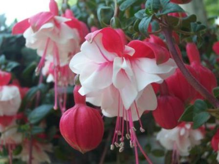 my most favorite fushia